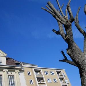 Baum Blau 1
