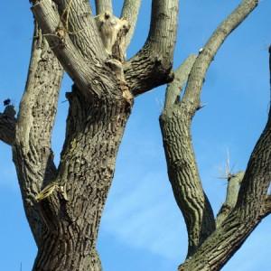 Baum Blau 2