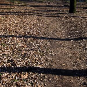 Streifen Wald 1
